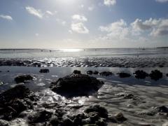 Einsam im Wattenmeer